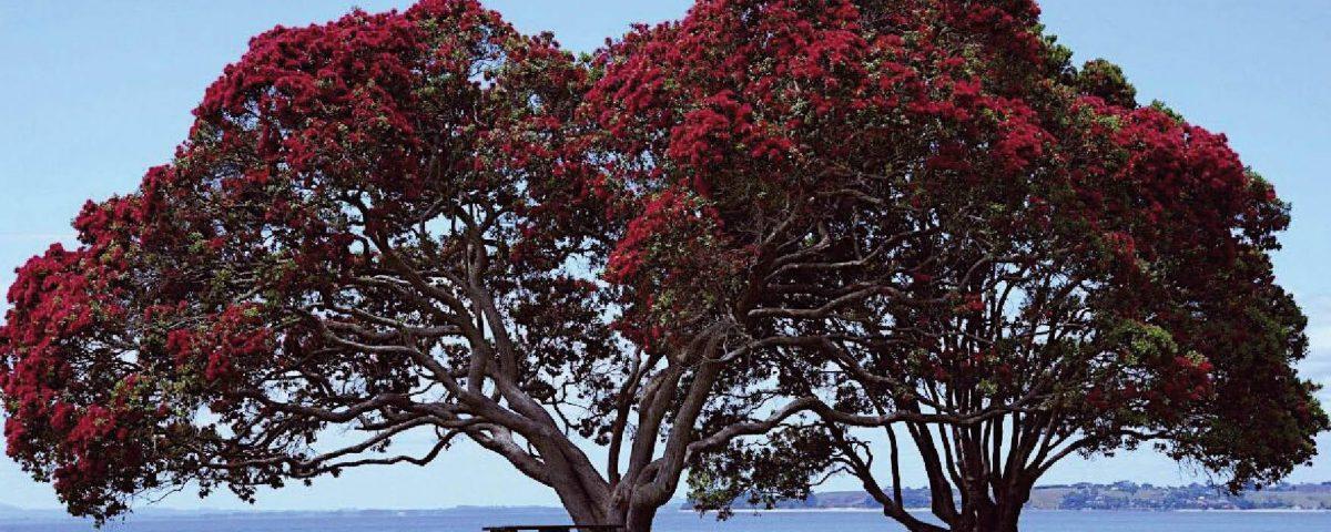 el árbol de la Navidad de Nueva Zelanda