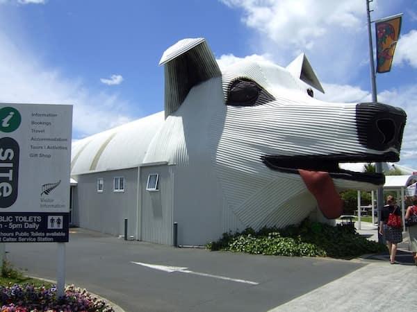 cerdo tirau de Nueva Zelanda - Asombrosos y peligrosos animales en Nueva Zelanda