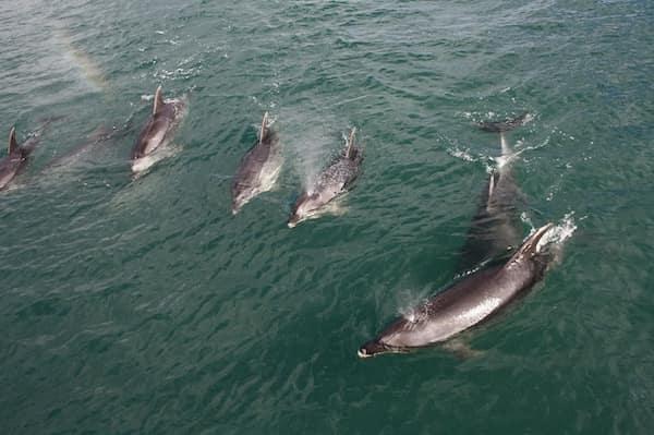 delfines en Nueva Zelanda - Asombrosos y peligrosos animales en Nueva Zelanda