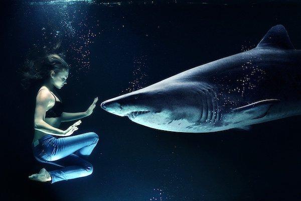 tiburón blanco de Nueva Zelanda - animales peligrosos de Nueva Zelanda